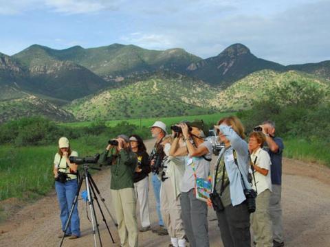 Analisando o cenário durante o Birding Festival em Tucson, no sudeste do Arizona